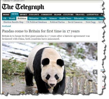 Pandas from China