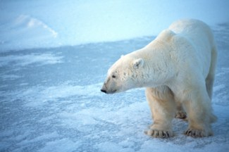 Don't let your business go the way of the polar bear