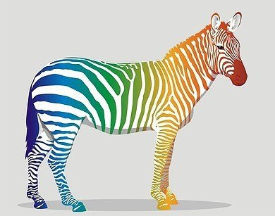 Image of Zebra in multiple colours