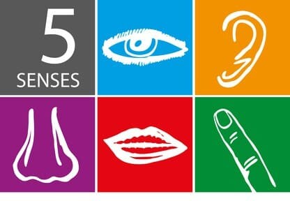 Graphic showing five senses