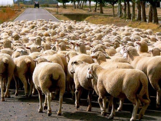 Social media bias is like following sheep